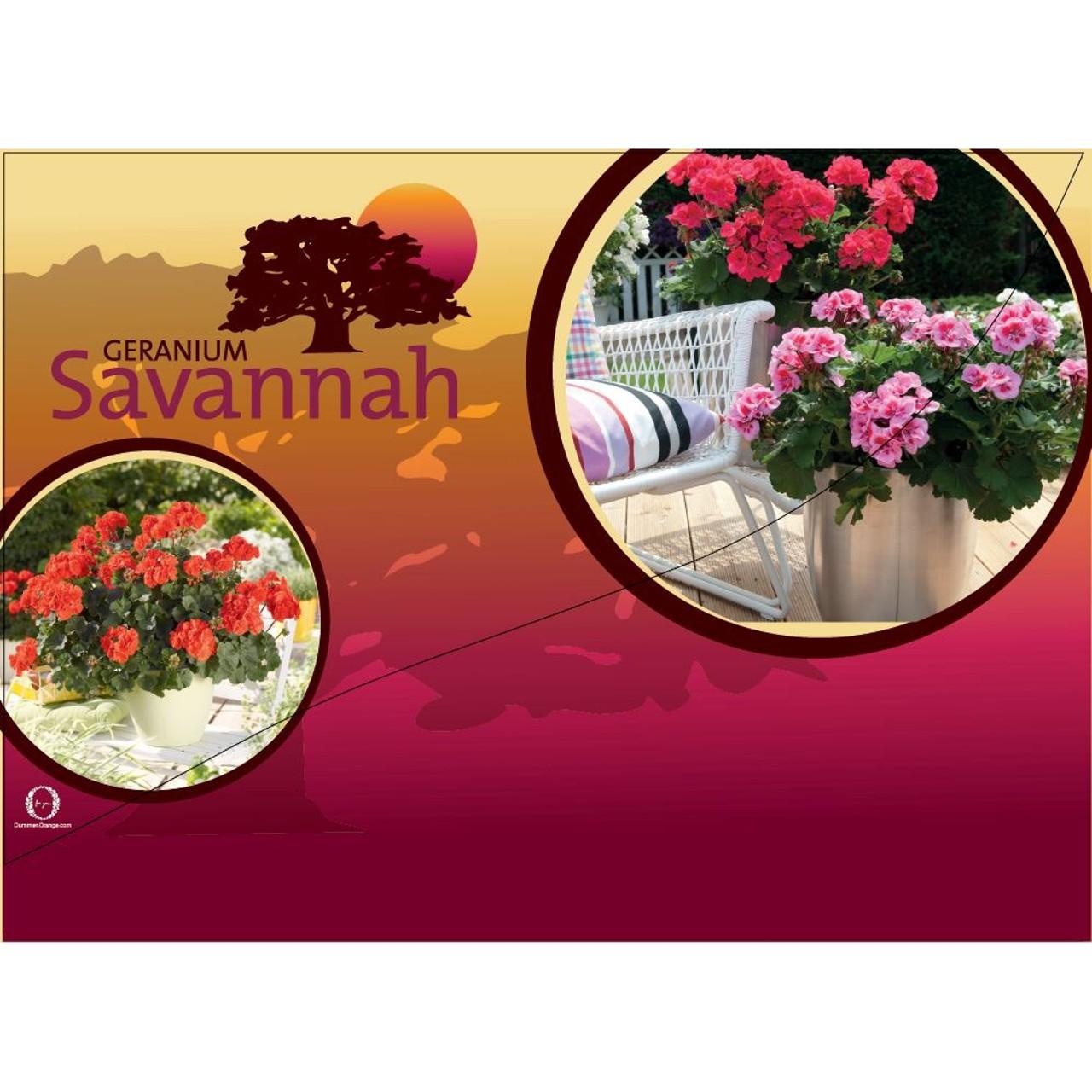 CC-Banner Savannah 50x35 cm