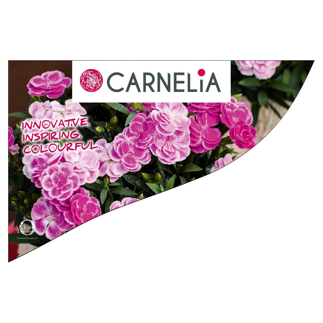 CC-Banner Carnelia 50x35 cm
