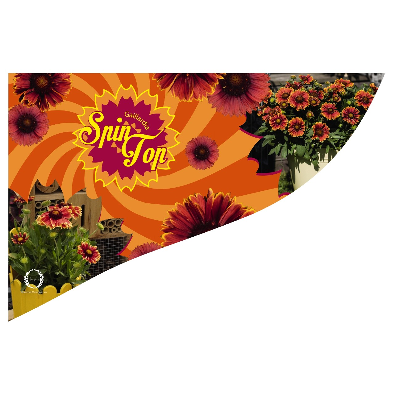 CC-Banner SpinTop 50x35 cm